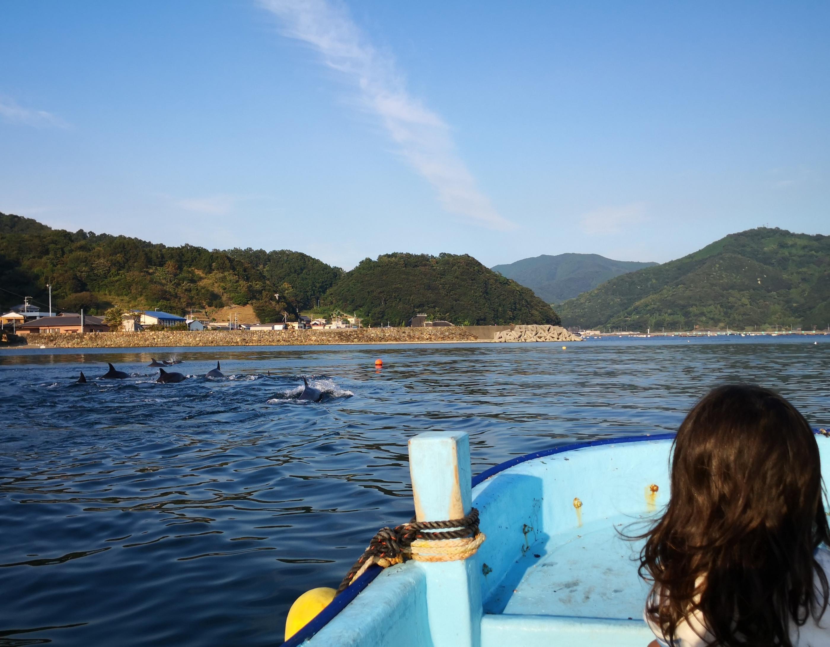 三瓶湾のイルカ
